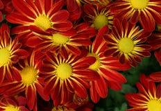 Plan rapproché des fleurs pour le fond Photos libres de droits
