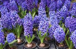 Plan rapproché des fleurs pourpres fleurissant dehors photographie stock libre de droits