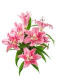 Plan rapproché des fleurs roses fraîches de fleur de lis Image libre de droits