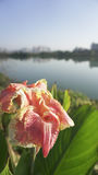Plan rapproché des fleurs sur le vert Photo stock