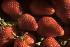 Plan rapproché des fraises avec l'éclairage dramatique Image stock