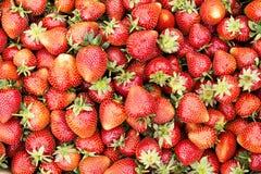 Plan rapproché des fraises parfaites mûres fraîches Photographie stock