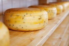 Plan rapproché des fromage-roues mûrissant sur des étagères photos libres de droits