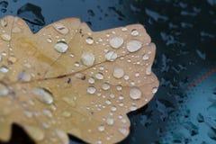 Plan rapproché des gouttes de pluie sur la feuille d'automne Image libre de droits