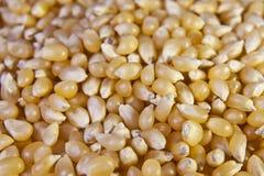 Plan rapproché des grains de maïs éclaté Images libres de droits