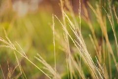 Plan rapproché des gras fleurissants Image stock