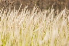 Plan rapproché des herbes Image libre de droits