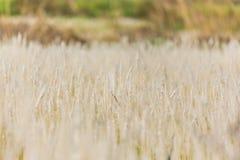 Plan rapproché des herbes Photographie stock libre de droits