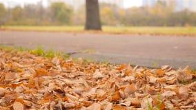Plan rapproché des jambes Un type avec une fille marchant par le parc Autumn Landscape banque de vidéos