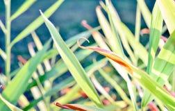 Plan rapproché des lames vertes Photo stock