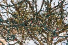 Plan rapproché des lumières de Noël enroulées autour des branches d'arbre dans d image libre de droits