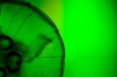 Plan rapproché des méduses Image stock