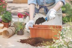Plan rapproché des mains du ` s de jardinier photos stock