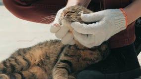 Plan rapproché des mains volontaires choyant le chat égaré mis en cage dans l'abri d'animal familier Concept de personnes, d'anim clips vidéos
