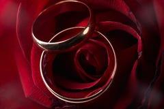 Plan rapproché des pétales de rose de rose d'offre d'intérieur avec l'anneau d'or de mariage Images libres de droits