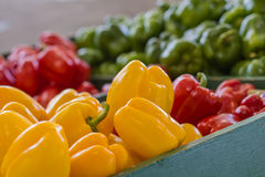 Plan rapproché des paprikas colorés Image libre de droits