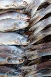 Plan rapproché des poissons Photo stock
