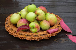 Plan rapproché des pommes rouges et vertes du plat en bois Photographie stock libre de droits
