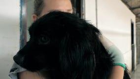 Plan rapproché des prises volontaires femelles sur le chien de mains dans l'abri Abri pour le concept d'animaux banque de vidéos