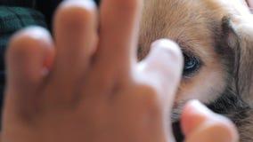 Plan rapproché des prises volontaires femelles sur le petit chiot de mains dans l'abri Abri pour le concept d'animaux clips vidéos