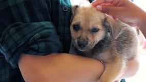Plan rapproché des prises volontaires femelles sur le petit chiot de mains dans l'abri Abri pour le concept d'animaux banque de vidéos