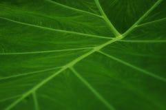 Plan rapproché des structures d'une feuille verte image libre de droits