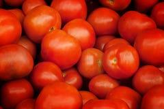 Plan rapproché des tomates Photographie stock libre de droits