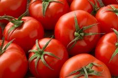 Plan rapproché des tomates fraîches et mûres photographie stock libre de droits