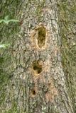 Plan rapproché des trous de pivert sur un arbre photo stock
