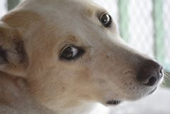 Plan rapproché du ‹isolé d'†de ‹d'†de chien attendant les propriétaires Photographie stock libre de droits