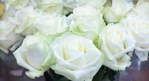 Plan rapproché du groupe lumineux de grandes belles roses blanches fraîches Photographie stock libre de droits