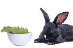 Plan rapproché du lapin noir mignon mangeant de la salade verte Images libres de droits