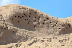 Plan rapproché du sable Martin Nests dans un flanc de coteau photo stock