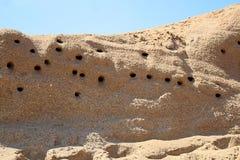 Plan rapproché du sable Martin Nests dans un flanc de coteau images stock