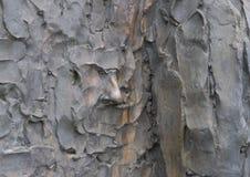 Plan rapproché du visage, sculpture en liberté, par Zenos Frudakis, Philadelphie Photographie stock libre de droits