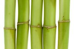 Plan rapproché en bambou Photo stock