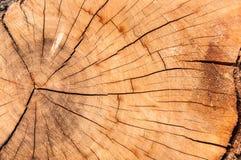 Plan rapproché en bois Photos libres de droits