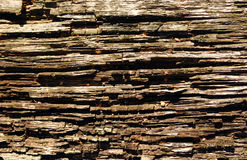 Plan rapproché en bois de texture Photographie stock