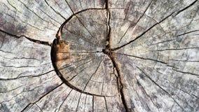 Plan rapproché en bois de texture image libre de droits