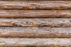 Plan rapproché en bois superficiel par les agents et fendu de mur de rondin Photo libre de droits