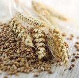 Plan rapproché entier de grains de froment de texture Photos stock