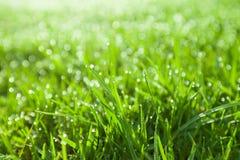 Plan rapproché extrême d'herbe humide verte Photographie stock libre de droits