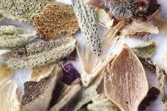 Plan rapproché extrême d'herbes de la Provence macro Image libre de droits