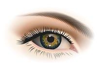 Plan rapproché femelle d'oeil Vecteur Photos libres de droits