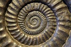 Plan rapproché fossile d'ammonite Photo stock