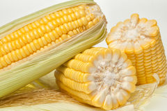 Plan rapproché frais d'épi de maïs Photos stock