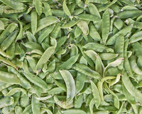 Plan rapproché frais de haricots verts Photographie stock