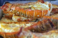 Plan rapproché frit de homard cuit pour le dîner Images libres de droits