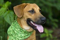 Plan rapproché heureux de chien Photos libres de droits