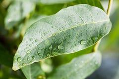 Plan rapproché humide de feuille Image stock